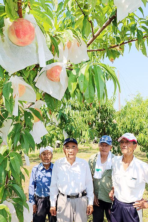 美しい桃色になったモモを見上げる白山部会長(右)ら組合員