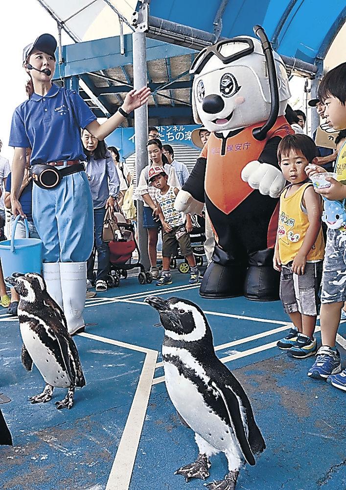 館内を歩くペンギンとうみまる=七尾市ののとじま水族館