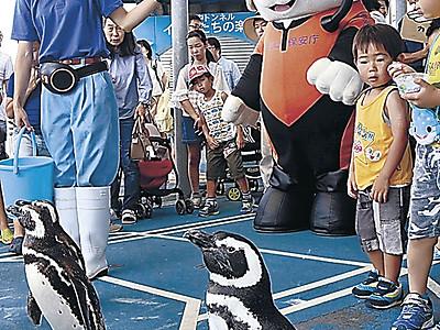 うみまるとペンギン、海難防止PRで散歩 のとじま水族館