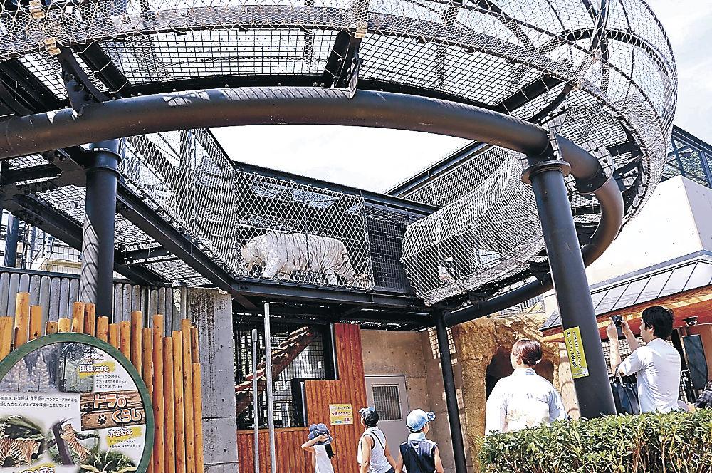 空中回廊を歩くクラウンを眺める来園者=能美市のいしかわ動物園