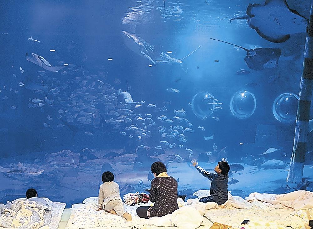 パジャマ姿でジンベエザメを眺める参加者=七尾市ののとじま水族館