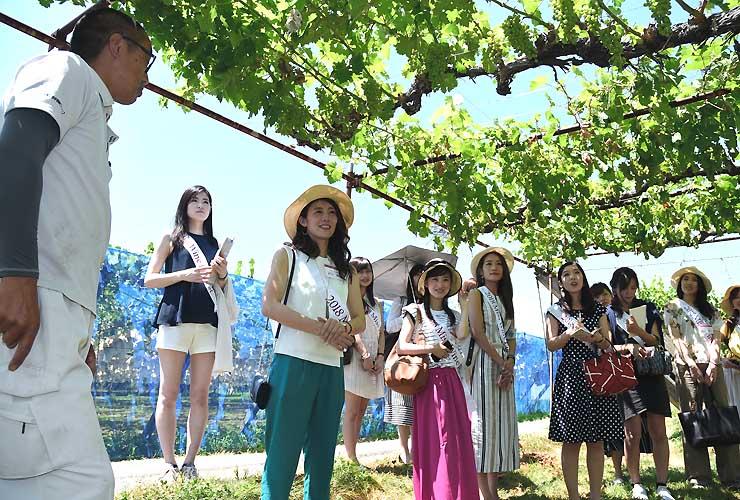 ブドウ畑で質問をするミス・ワインの出場者ら