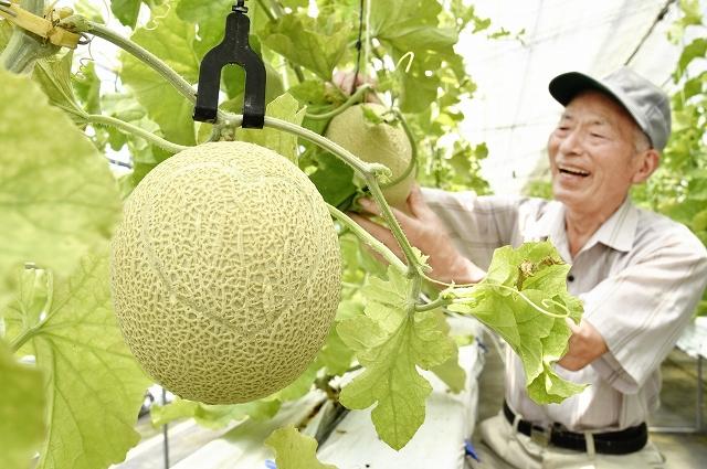 表皮にハートマークの入ったメロンを収穫する栗田さん=7月24日、福井県鯖江市