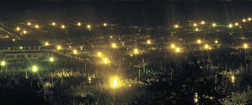 ナシ畑を淡く照らし出す防蛾灯の光=加賀市奥谷町