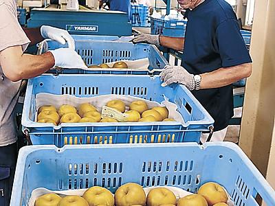 ナシ「新水」甘み上々 加賀で出荷開始、猛暑が好影響