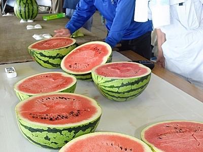 しらやま西瓜、甘み最高 福井・越前市の特産