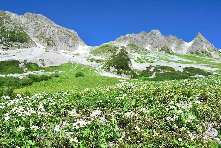 ハクサンイチゲとシナノキンバイが咲き誇る北アルプス涸沢カールのお花畑