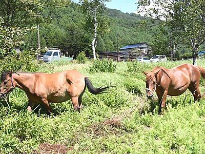 木曽馬のいる風景、車窓からも 開田高原の国道沿いで試験放牧