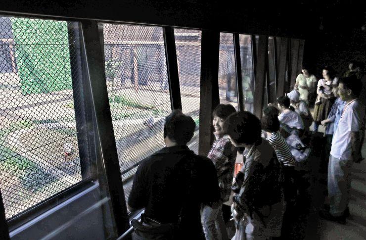 トキ分散飼育センターの観覧棟「トキみ~て」で観察する人たち=18日、長岡市