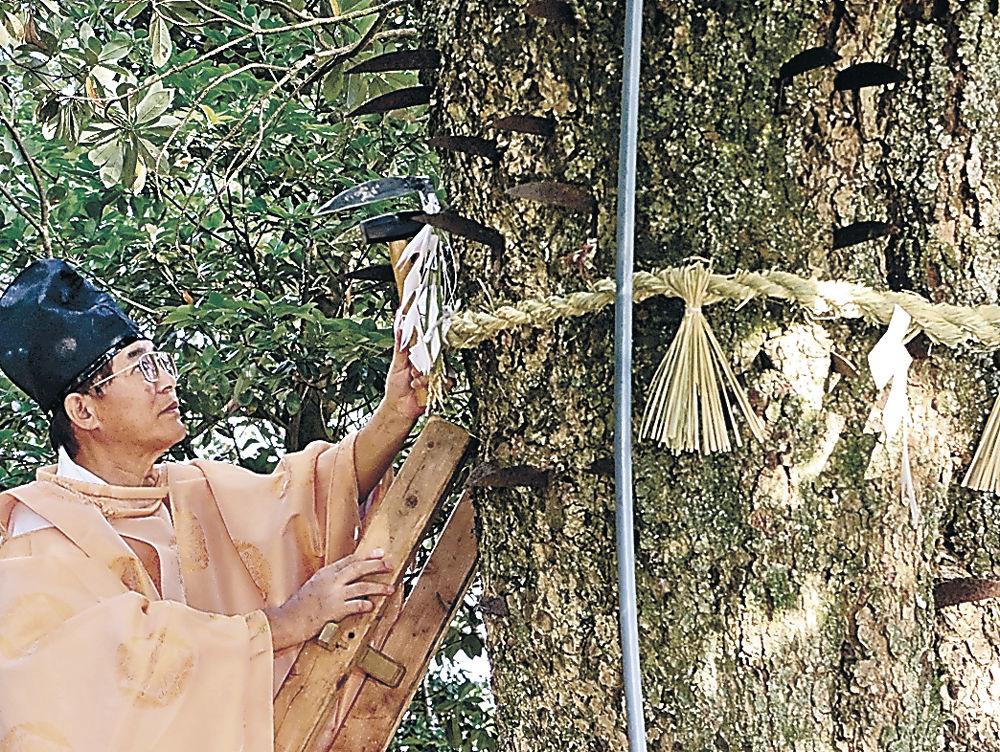 はしごに登って鎌を打ち込む宮島さん=中能登町金丸の鎌宮諏訪神社