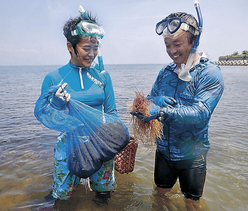 海藻を採る長竹さん(左)と池森課長=七尾市能登島祖母ケ浦町