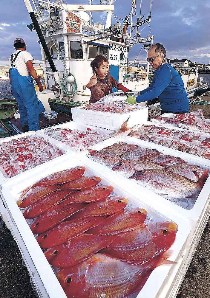底引き網漁が解禁され、水揚げされたタイ=金沢港
