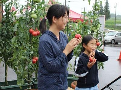 トマトをたらふく 旅館など独自料理を提供 妙高