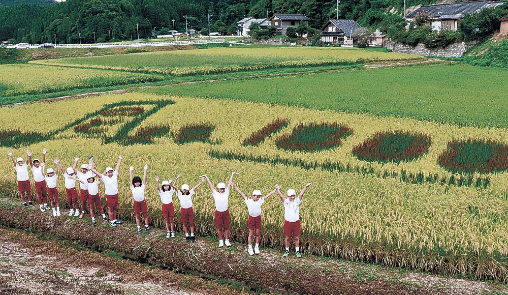 キリコの絵と「1300」の数字が浮かんだ田んぼアートの完成を喜ぶ児童=輪島市町野町川西