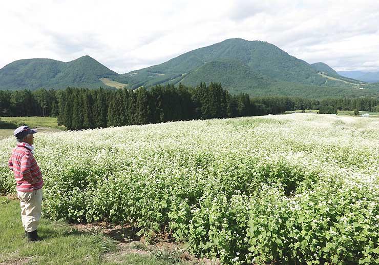 高社山(右奥)を望む畑に広がるソバの花を眺める小林さん