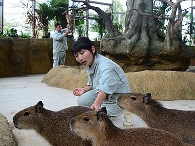 世界最大級のウサギも新たに展示 福井市のミニ動物園、9日リニューアル
