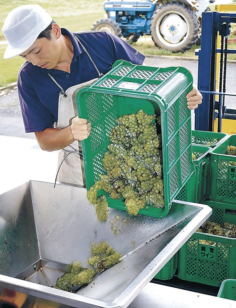 破砕機に掛けられるワイン用ブドウ=穴水町旭ケ丘