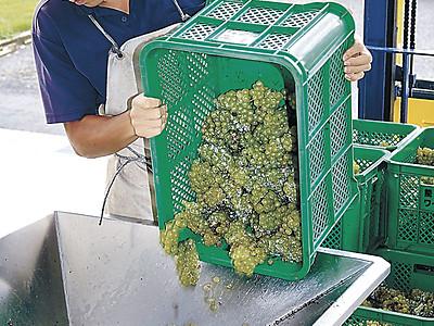 能登ワイン台風に負けず 穴水で醸造スタート