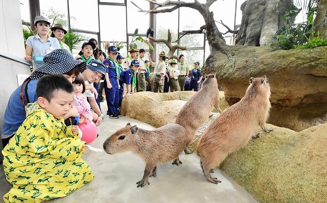 新動物舎「ハピジャン」でカピバラに餌をやる親子連れ=9月9日、福井県福井市の足羽山公園遊園地