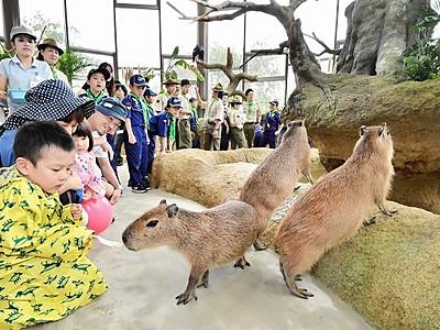 カピバラと触れ合い笑顔 福井・足羽山動物園