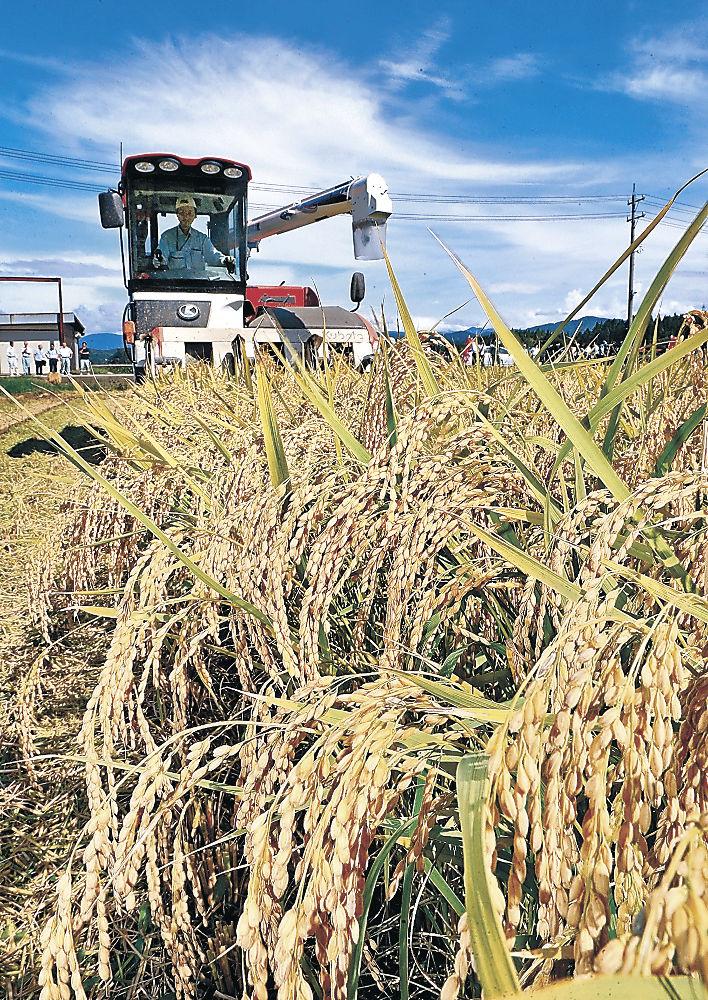 本格的な収穫が始まったひゃくまん穀=小松市河田町