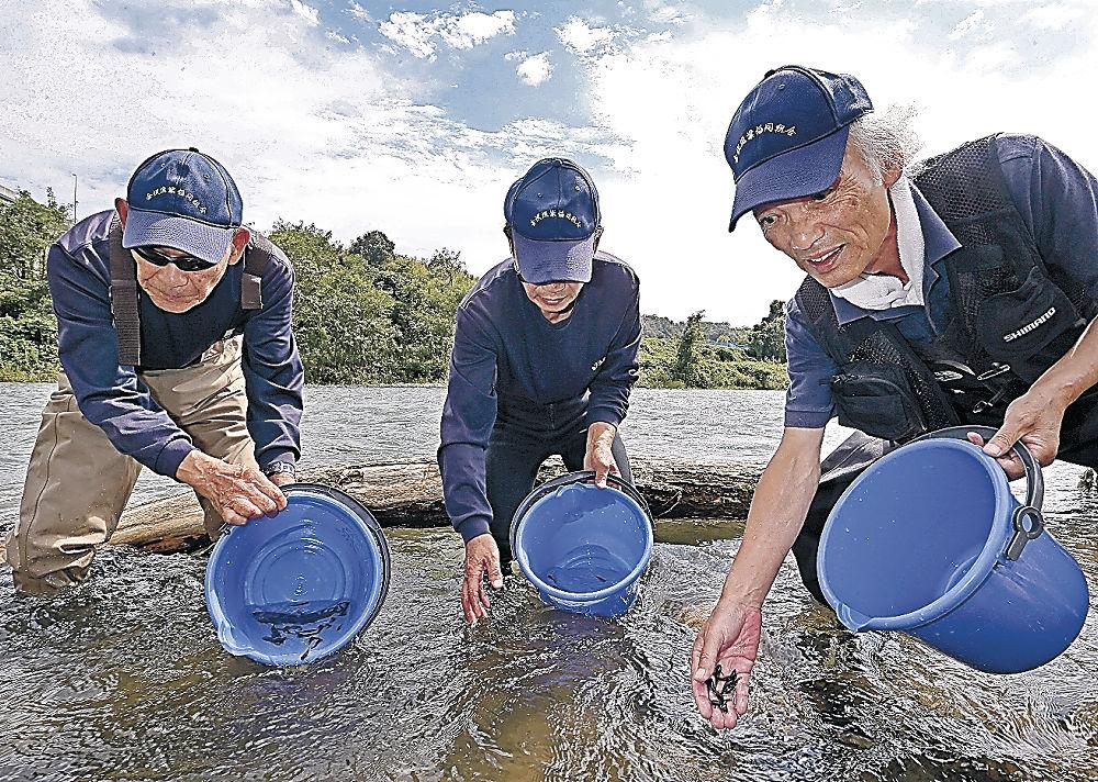 ゴリの稚魚を川に放つ組合員=大桑町の犀川