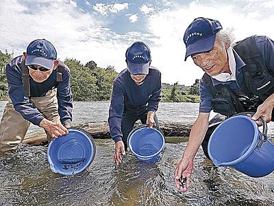 ゴリ稚魚、犀川へ 金沢漁協、6千匹放流