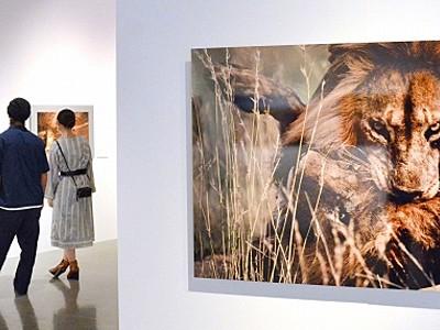 森羅万象写真で迫る ナショナルジオグラフィック展 福井市美術館