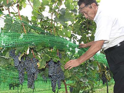 山形村ワイン造り体験 30日催し「開業にも関心を」