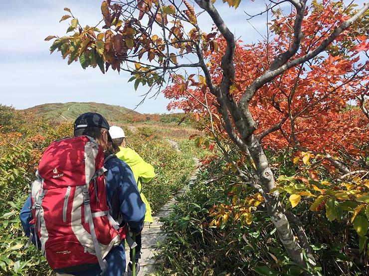 多彩な高山植物が色づく秋の白木峰