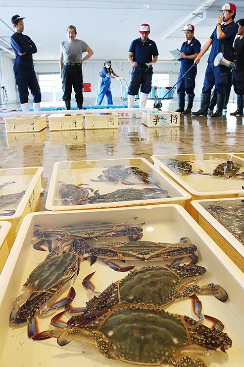 「越のわたり蟹」を前に競りを行う競り人と仲買人=新湊漁港