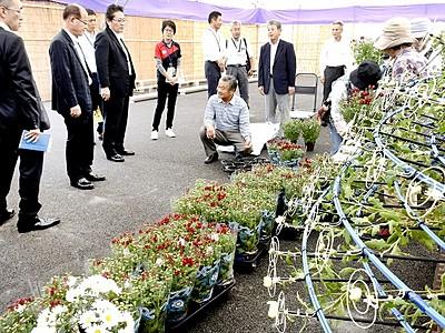 「たけふ菊人形」9月28日開幕 2万株の菊花やOSK