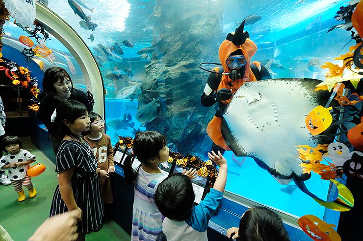 魚たちに餌を与える「かぼちゃダイバー」