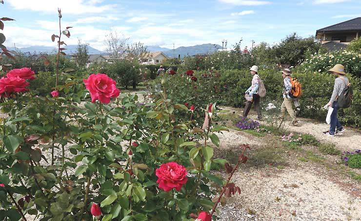 さまざまな種類のバラが咲いている一本木公園
