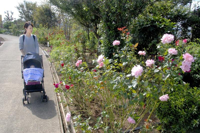 バラ園に咲く花を楽しむ親子連れ=13日、福井県の坂井市ゆりの里公園