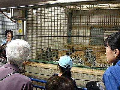 赤ちゃんアムールトラ3頭 命名式 長野・茶臼山動物園