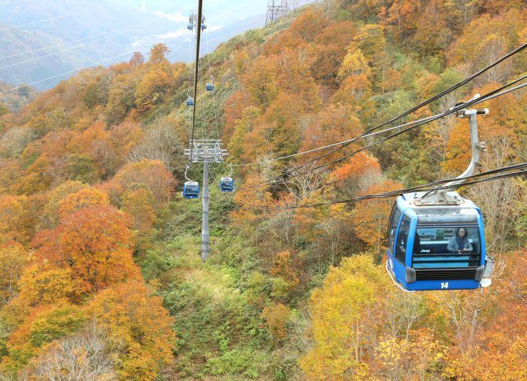 赤や黄色に染まった紅葉の山を進むドラゴンドラ=15日、湯沢町