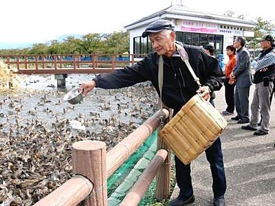 白鳥おじさん掛け声高らか 餌付け始まる 阿賀野・瓢湖