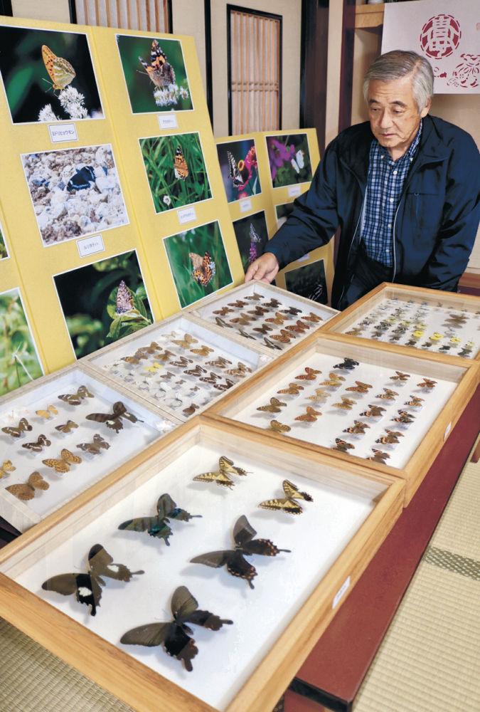 チョウの標本と写真の展示準備を進める天野さん=輪島市鳳至町
