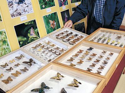 能登のチョウ 標本や写真を一堂に展示
