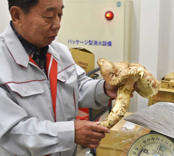 マツタケを手に「これほどの大物は見たことない」と驚く林さん