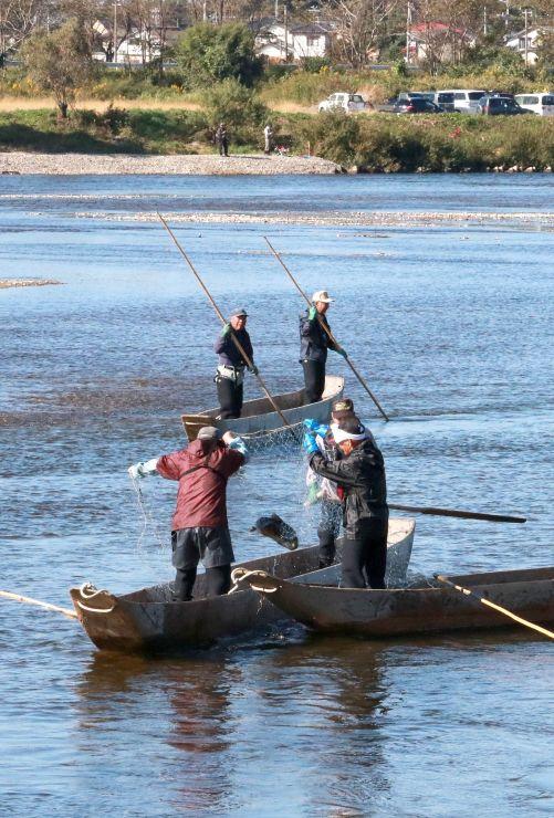 川舟をうまく操り、サケを捕まえる伝統の居繰り網漁=21日、村上市