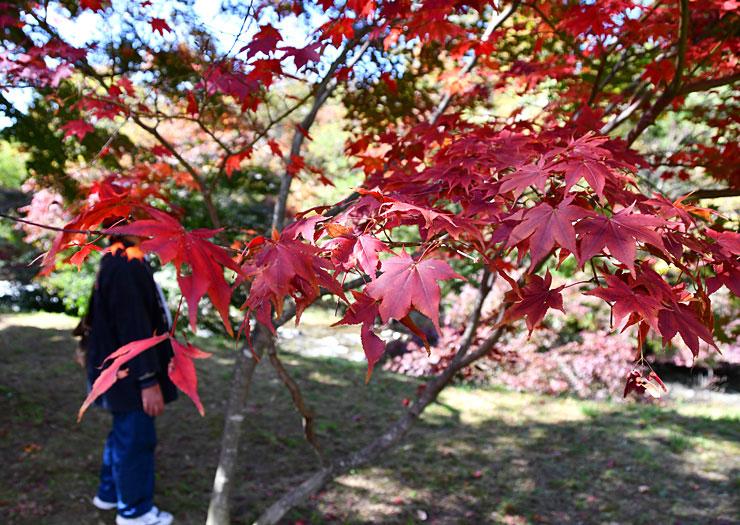 紅葉が始まった岡谷市の出早公園