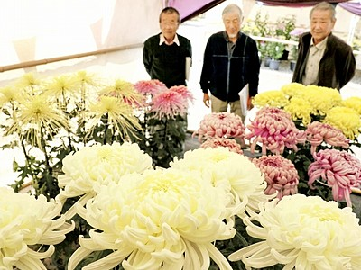 菊花鮮やか大輪180点 福井県護国神社で「芸術展」