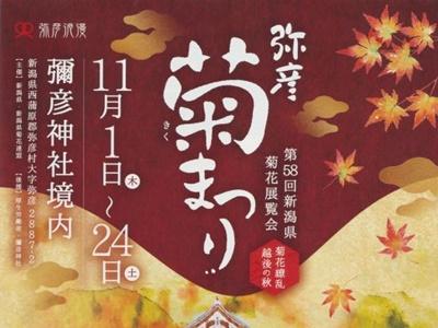 弥彦菊まつり11月1日から 丹精込めた4千鉢披露