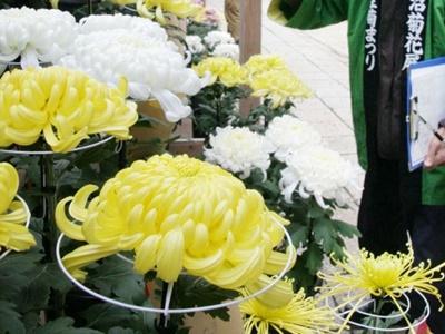 境内彩る秋の大輪 普光寺で菊まつり31日から 南魚沼