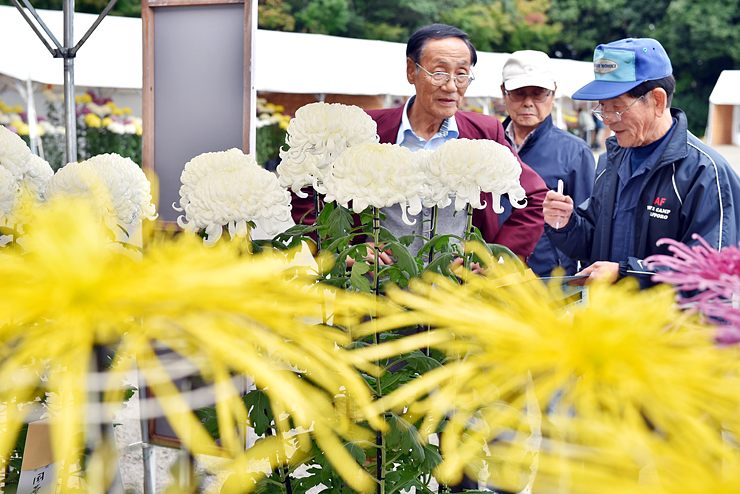 さまざまな菊が咲き誇る展示会=稲荷公園