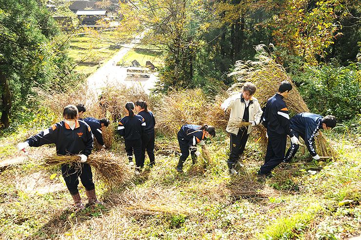 茅刈りに取り組む南砺平高校の生徒たち
