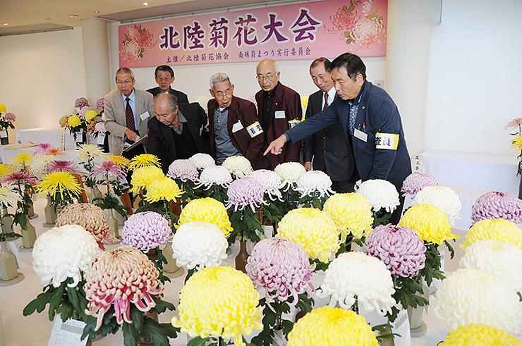 北陸菊花大会の出品作が並ぶ会場=南砺市園芸植物園