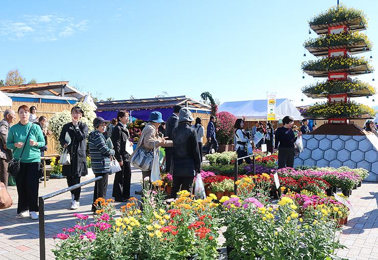 色とりどりの菊や五重塔などの造形物が並ぶ「南砺菊まつり」=南砺市園芸植物園